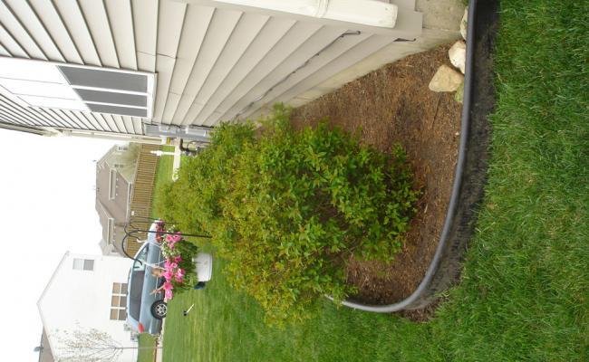 lawn-edging-mistakes014