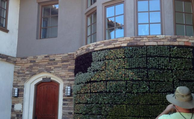 living-wall-stone-edg010