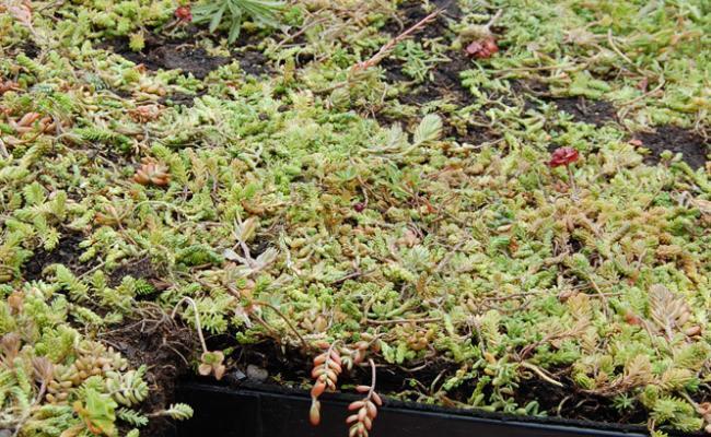 rooftop-garden030