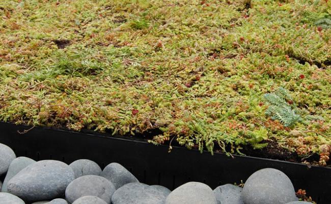 rooftop-garden036