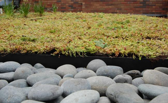 rooftop-garden037