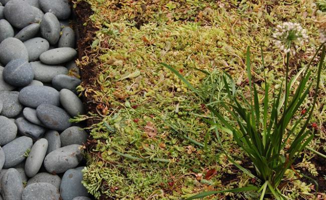 rooftop-garden039