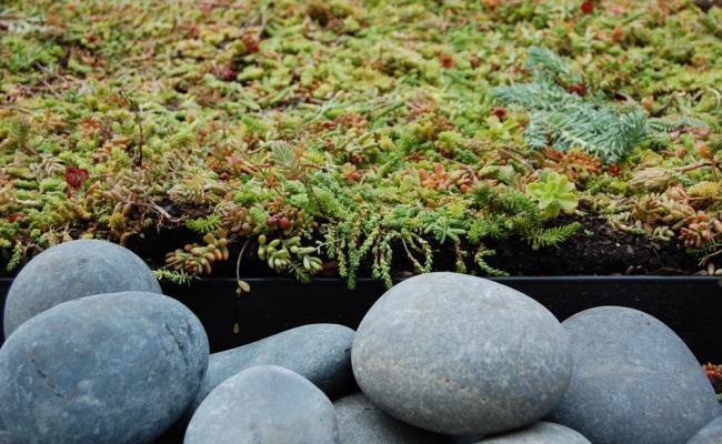 rooftop-garden041