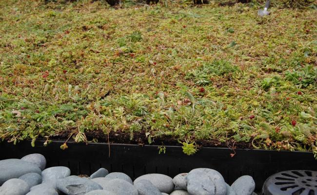 rooftop-garden043