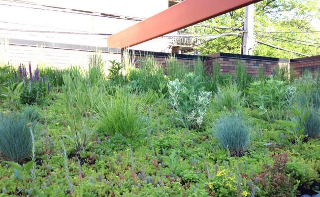 rooftop-garden045