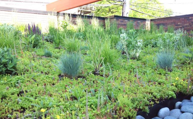 rooftop-garden047